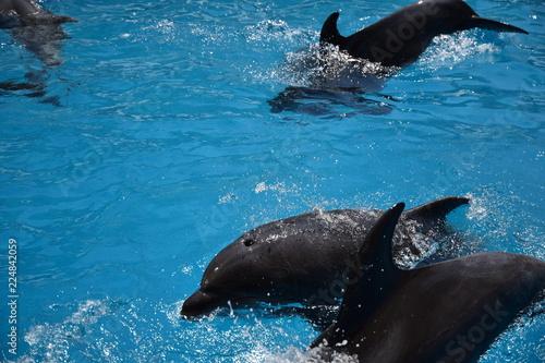 Poster Dolfijn Dolphin training.Fast mammals.Human friends
