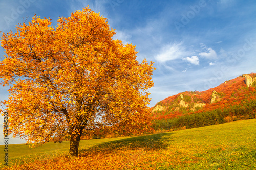 Fotobehang Herfst Landscape with a tree in autumn color, National Nature Reserve Sulov Rocks, Slovakia, Europe.