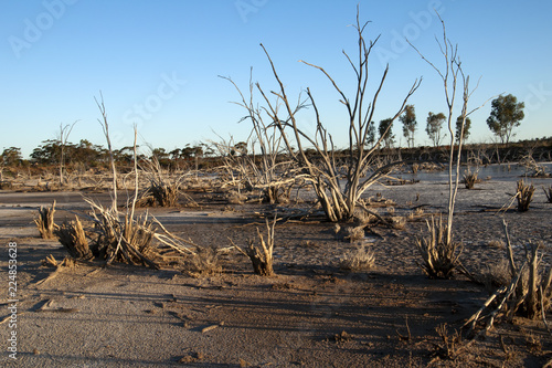 Papiers peints Cappuccino Hyden Australia, view of dry salt lake with dead trees in the late afternoon