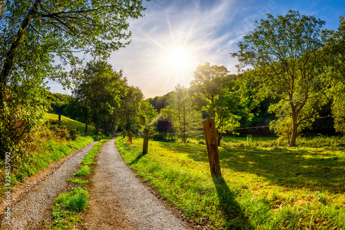 Summer Landscape with bright sun and road through green meadows with trees
