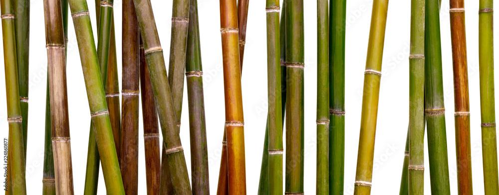 multicolored bamboo background, bamboo isolated on white background