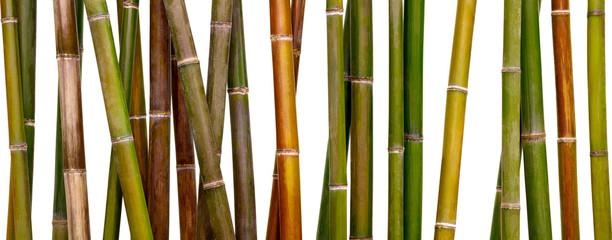 raznobojna bambusova podloga, bambus izoliran na bijeloj podlozi