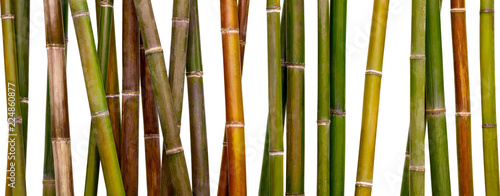 Spoed Fotobehang Bamboo multicolored bamboo background, bamboo isolated on white background