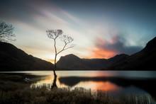 The Lone Tree At Sunrise At Bu...