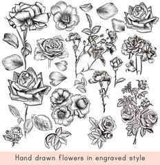 A collection of high detailed vector hand drawn rose  flowers in vintage engraved style