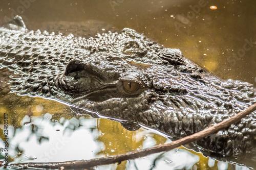 Foto op Plexiglas Krokodil Close up of crocodile head in river