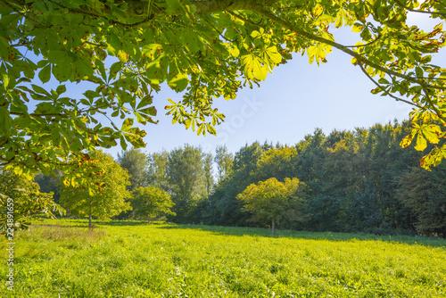 Staande foto Lente Trees in a meadow in sunlight at fall
