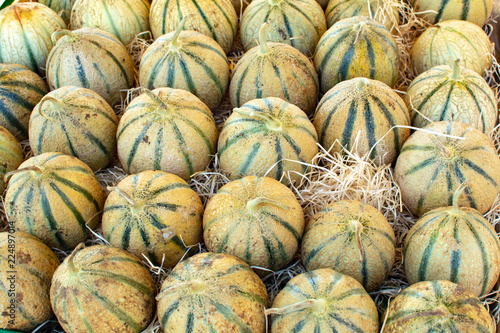 Melons from Cavaillon, ripe round charentais honey cantaloupe melons on local market in Provence, France