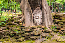 The Buddha Is In The Wood Root..