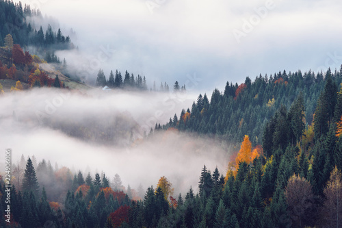 Poster Morning with fog Autumn in the mountains
