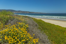 Beach And Flora, Monterey Bay, Peninsula, Monterey Ocean, California