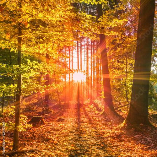 obraz PCV Sonnendurchfluteter Wald im Herbst