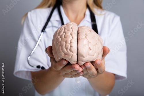 Obraz Doctor Holding Human Brain Model - fototapety do salonu