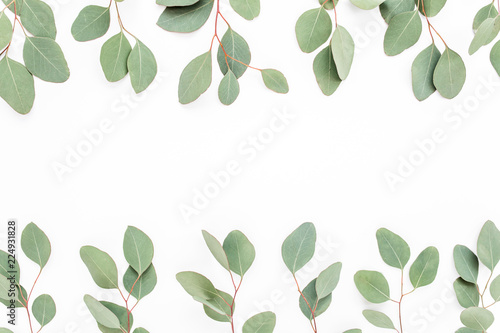 Fototapety, obrazy: Border frame made of branches eucalyptus isolated on white background. lay flat, top view