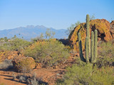 View to Four Peaks from Fountain Hills Botanical Garden.