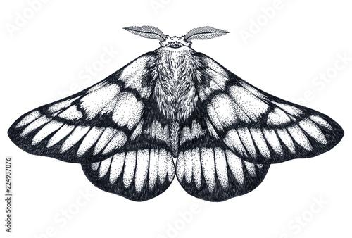 Hand drawn butterfly tattoo. Dotwork tattoo. Hemileuca griffini. Griffin's sheepmoth or Canadian fleabane moth.