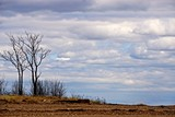 Two bare trees and clouds in a wintery sky over a beach.
