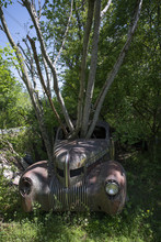 Tree Growing Through Vintage C...