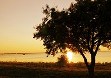 Silhouette Of A Tree By Hefner Lake At Sunset, Oklahoma City