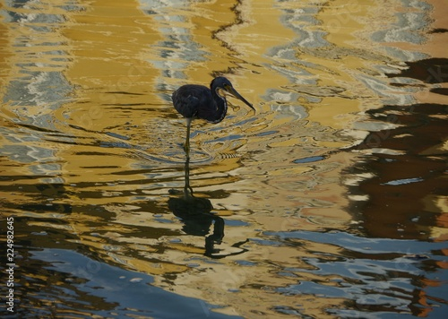 Photo  Egret wading  in a pool with golden ripples and reflections at sunset