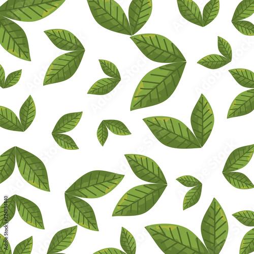 Fototapety, obrazy: leafs plants ecology pattern background