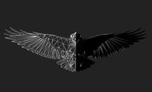 Raven In Flight On Grey Backgr...