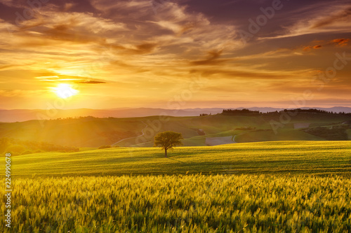 Spoed Foto op Canvas Weide, Moeras Idyllic view, foggy Tuscan hills in light of the rising sun