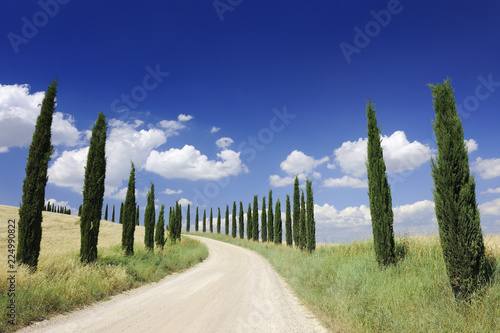 Idyllic view, dirt road and row of green cypresses