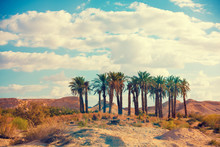 Oasis In A Desert. Grove Of Palm Trees In The Desert. Wilderness