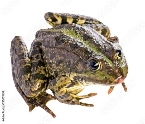 Tuinposter Kikker frog isolated on white