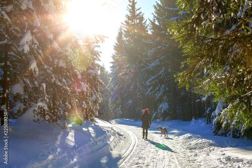 Frau und Weimaraner Jagdhund machen einen Spaziergang im sonnigen Winterwald