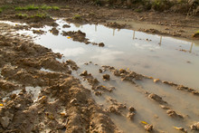 Mud Puddle On A Dirt Road