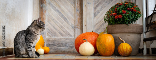 Obraz Halloween decorated front door with various size and shape pumpkins. Cat on Front Porch decorated for the Halloween, Thanksgiving, Autumn season banner. - fototapety do salonu