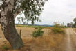 Naturpark Steinhuder Meer bei Dürre