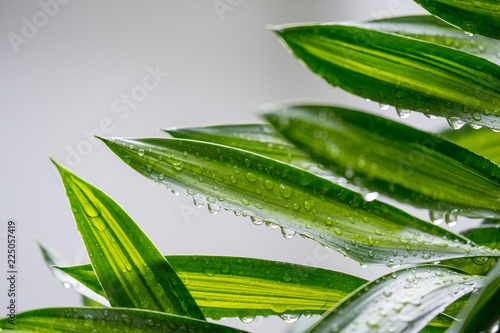 Poster Vegetal Rain drops on green plant, after rain