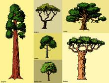 Vector Tree Sketch Hand Drawn ...