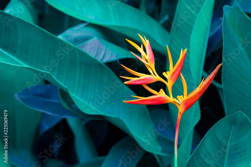Foto  tropical leaves colorful flower on dark tropical foliage nature background dark