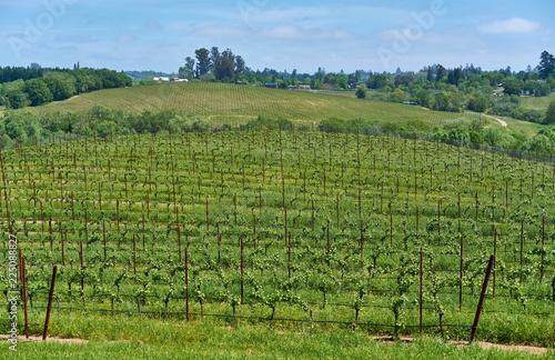 Keuken foto achterwand Verenigde Staten Vineyards in California, USA