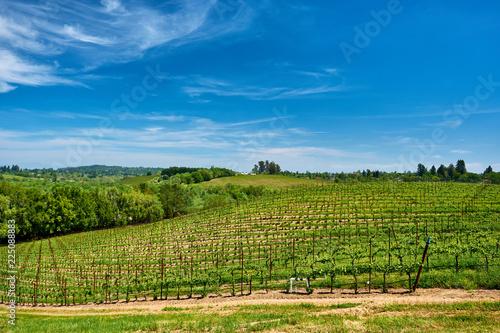 Deurstickers Centraal-Amerika Landen Vineyards in California, USA