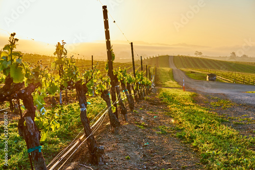 Keuken foto achterwand Centraal-Amerika Landen Vineyards at sunrise in California, USA