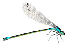 Blue Dragonfly Isolated On Whi...