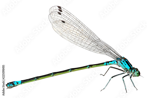 Blue Dragonfly Isolated on white background. Macro