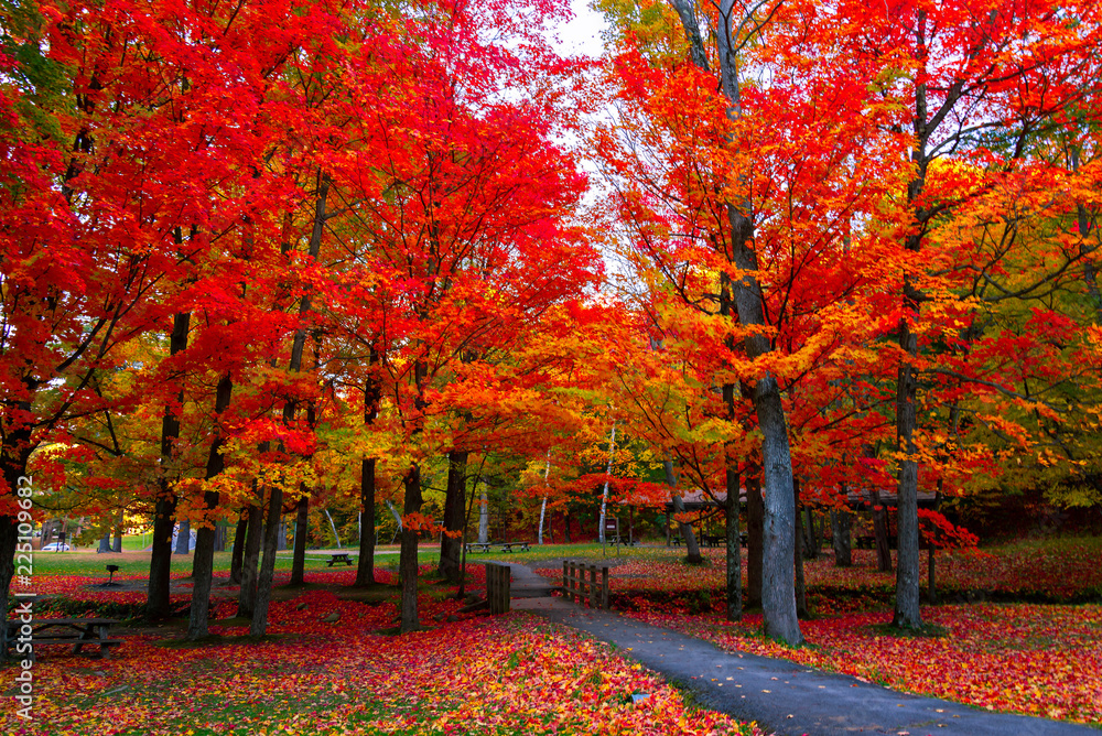 Fototapety, obrazy: Beautiful fall foliage in the northeast USA