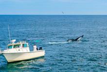Boat And Whale, Cape Cod, Massachusetts, US