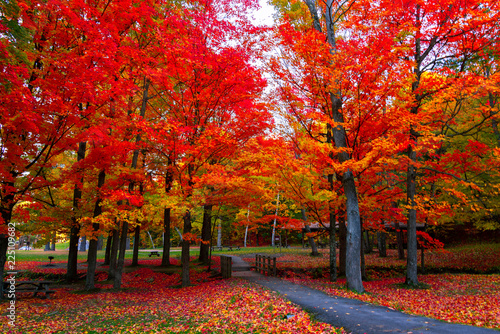 Spoed Foto op Canvas Rood traf. Beautiful fall foliage in the northeast USA