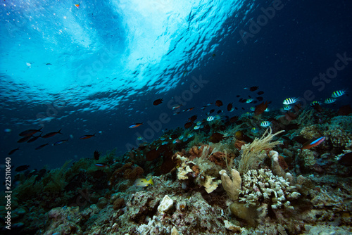 Tropical Coral Reef Underwater Landscape