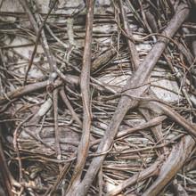 Organic Root Pattern - Tree Ro...