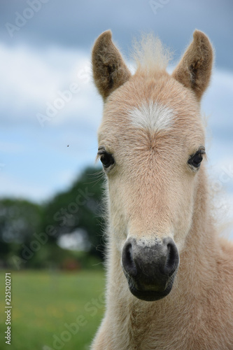 Cute Baby Horse Buy This Stock Photo And Explore Similar Images At Adobe Stock Adobe Stock
