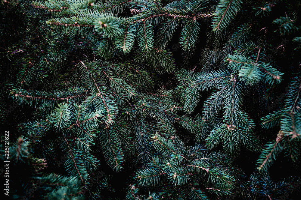 Fototapety, obrazy: Christmas fir tree branches Background. Christmas pine tree wallpaper. Copy space..