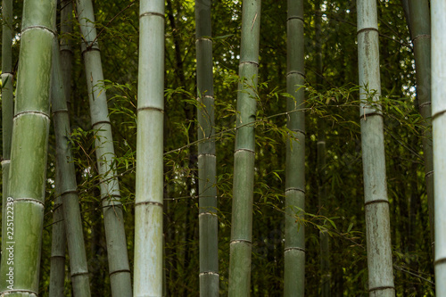 Tuinposter Bamboe green bamboo forest inside park